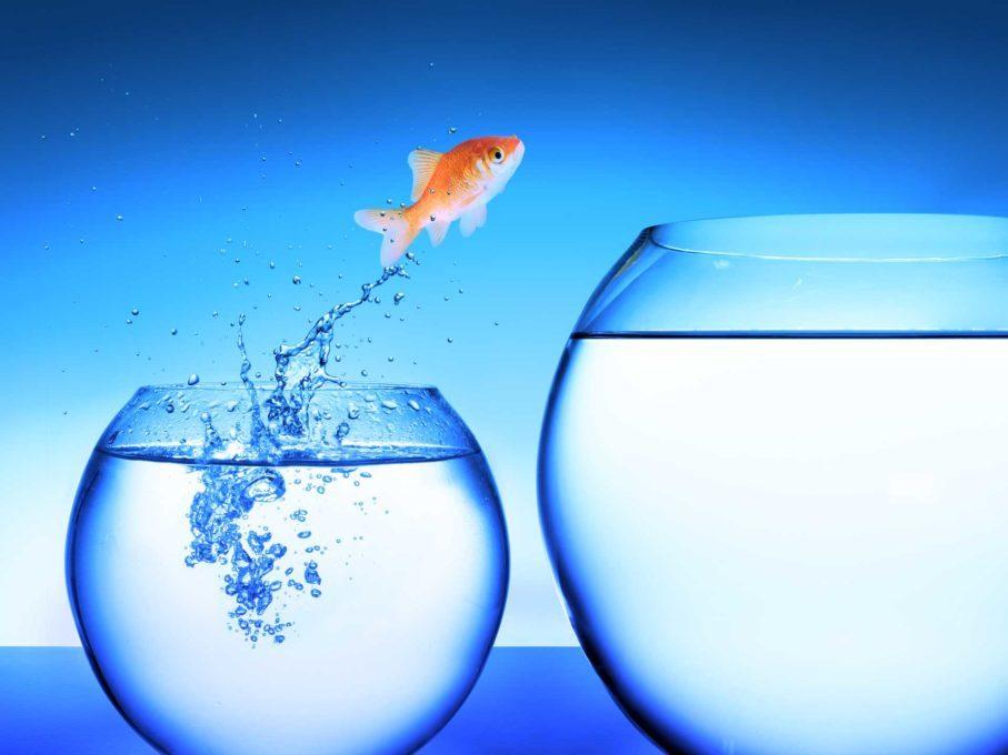 business consultancy verandermanagement